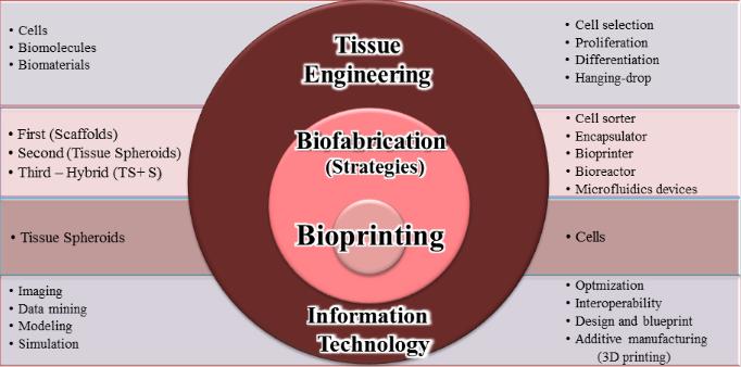 3dbioprinting